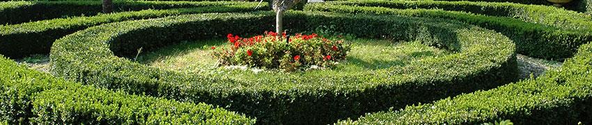 Afscheiding of decoratie haagplanten