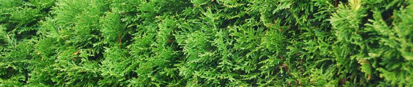 Assortiment van Haagplanten.net