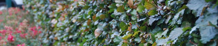 Bladhoudend en bladverliezend