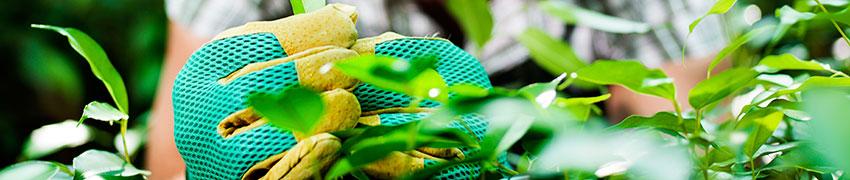 Haagplanten planten en verzorgen