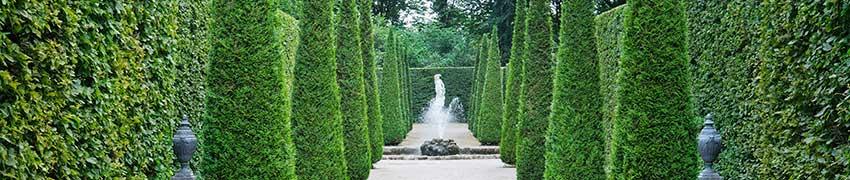 Haagconiferen: soorten en cultivars