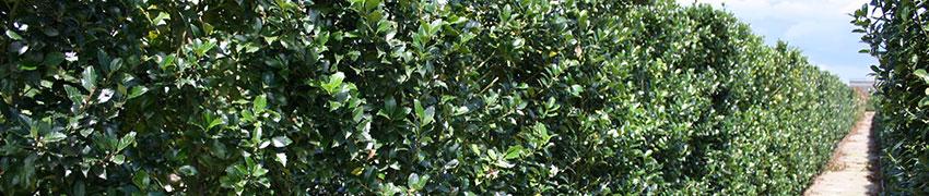 Haagplanten en bomen