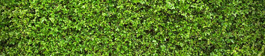 Haagplanten informatie