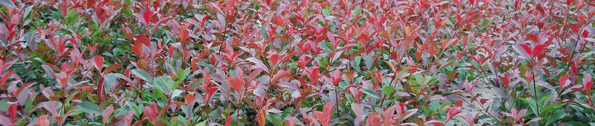 Haagplanten kiezen en kopen