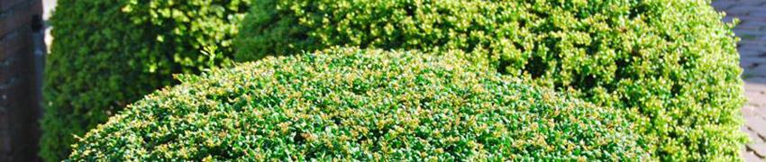 Haagplanten kiezen