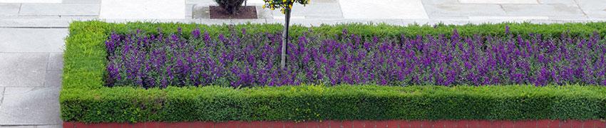 Haagplanten soorten vinden