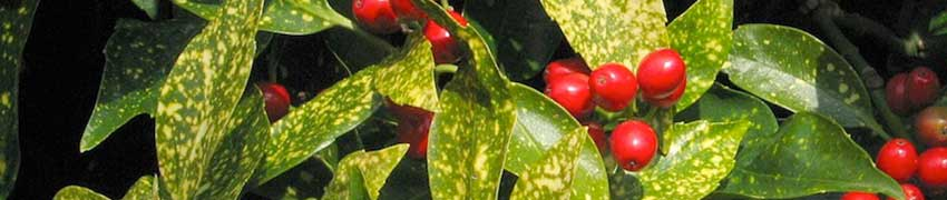 Haagplanten of tuinplanten?
