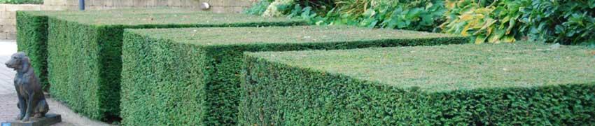 Haagplantenleveranciers