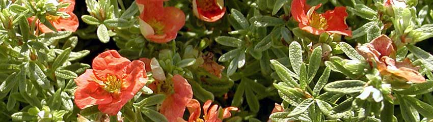 De meest kleurrijke zomerbloeiers