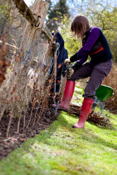 Voorbereiding voor het planten van een heg