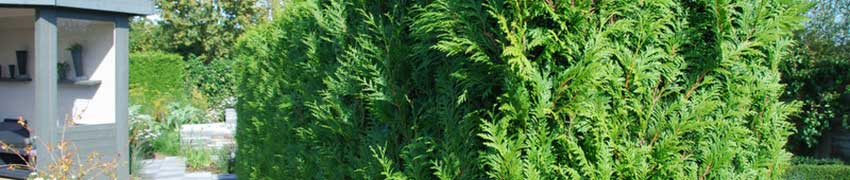 Levensboom in uw tuin