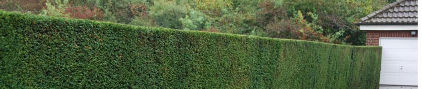 Natuurlijke tuinafscheiding