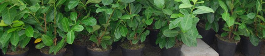 planten in pot kopen