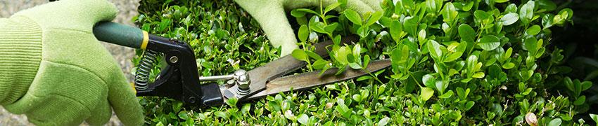 Planthandleiding en verzorging