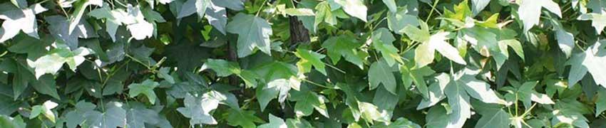 Tuinplanten online kopen