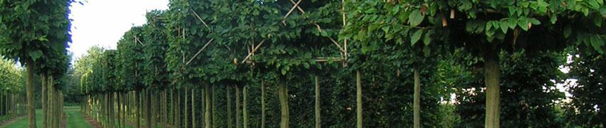 Wat gebeurt er op een boomkwekerij?