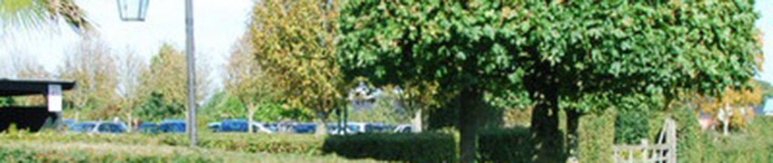 Wintergroene struiken op Haagplanten.net