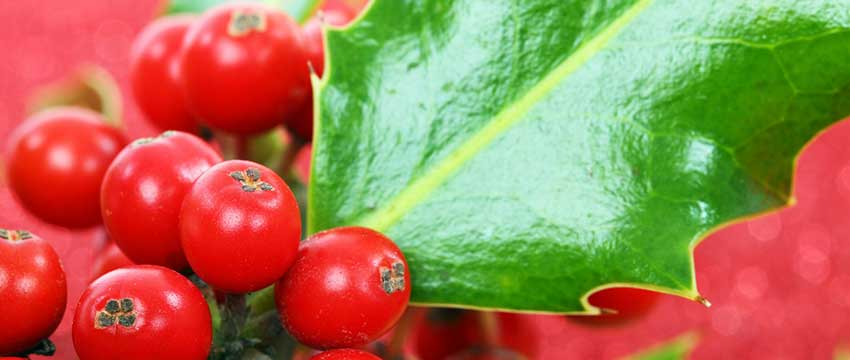 Winterharde haagplanten kopen
