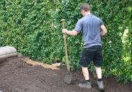 Planten van kant en klaar hagen