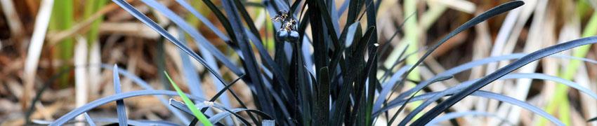 zwart gras sfeerfoto
